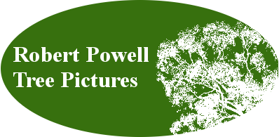 Robert Powell Tree Pictures | Pictures of trees natural to Perth, Western Australia