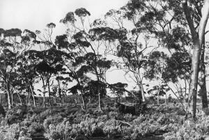 Wheatbelt and Goldfields 6