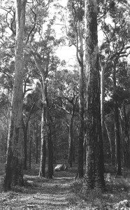 Timber forests 5