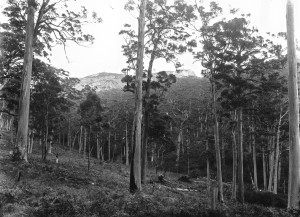 Timber forests 11