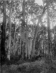 Timber forests 3