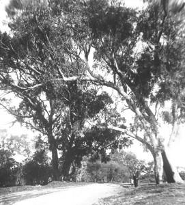 Perth and environs 11